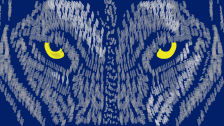 wilk oczy