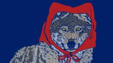 wilk-czerwony-kapturek